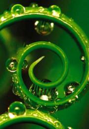Живые водоросли SPA программа для тела